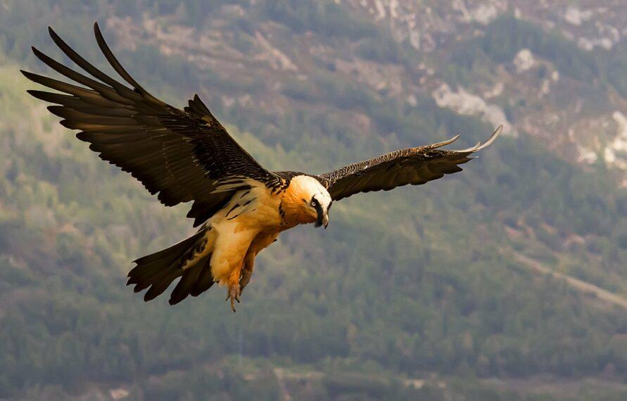Fauna del Pirineo